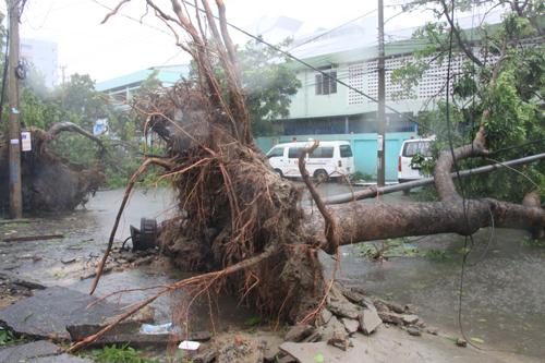 Các tỉnh thành từ Thừa Thiên-Huế đến Quảng Ngãi thiệt hại hơn 1.500 tỉ đồng do bão số 11